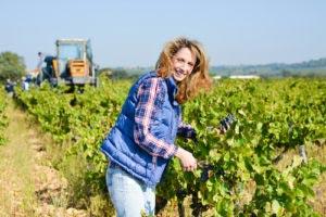 expertise agricole viticole expert comptable pour viticuleur agriculteur