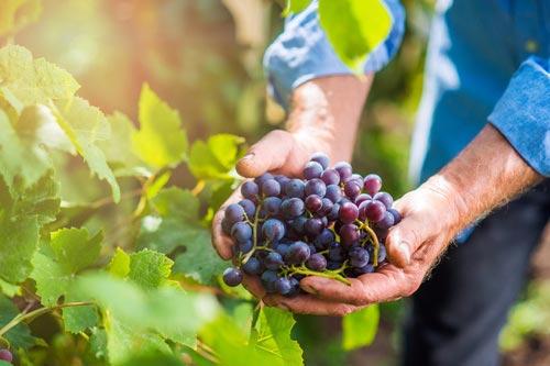 hans et associes kientzheim pole agricole viticole